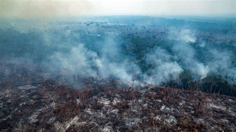 Brazil's deforestation is exploding—and 2020 will be worse