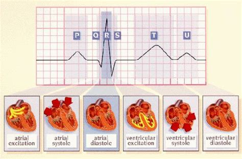 Worksheet of Heart Conduction System | Conduction system
