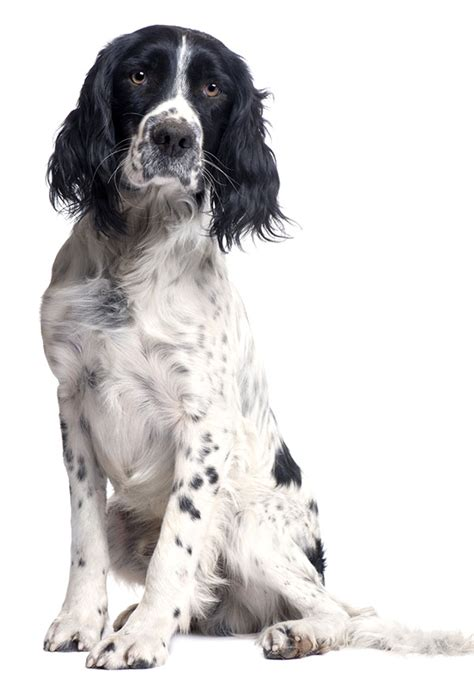 Health Benefits Of Owning A Dog Fairmont Hotels
