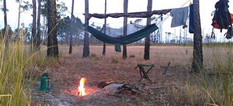 Primitive camping unlimited in Ocala National Forest